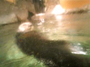 Otterfloats